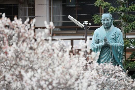 本東寺(慧日梅)