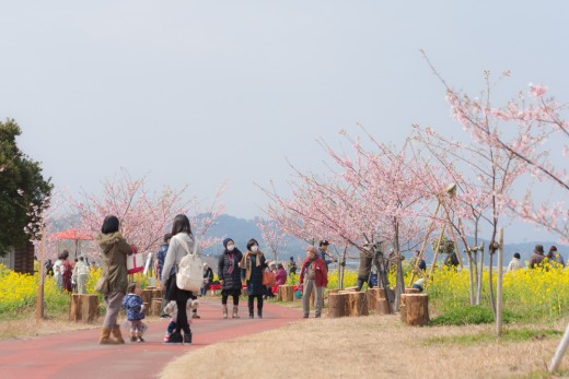 20160227konohana-walk-42