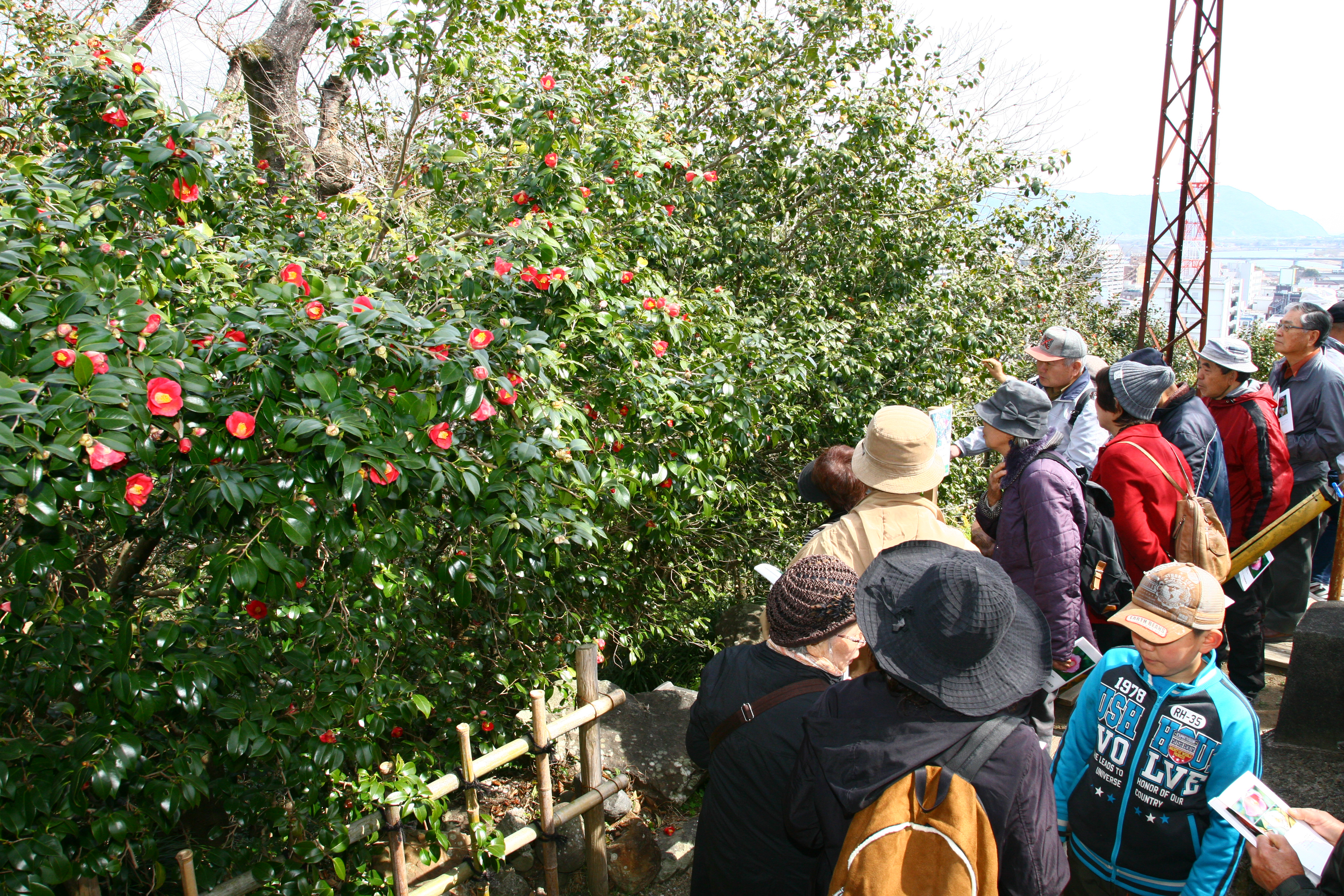 8be05c8048 延岡城跡城山公園には、108種、3,300本ものヤブツバキが自生していて、最大の特徴は、何といっても紅・白・ピンク・絞り・覆輪と全ての花色が揃って いる事です。