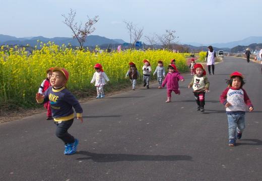 菜の花と走る
