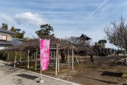 hontoji-suigyo2018-10