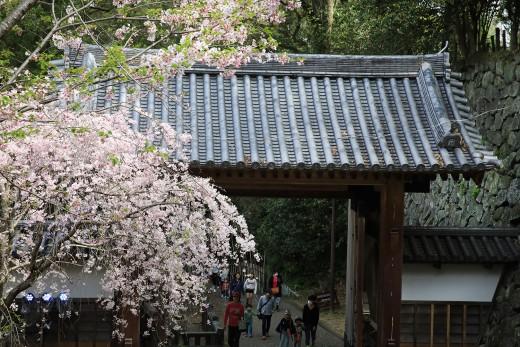 20180331_shiroyama_08